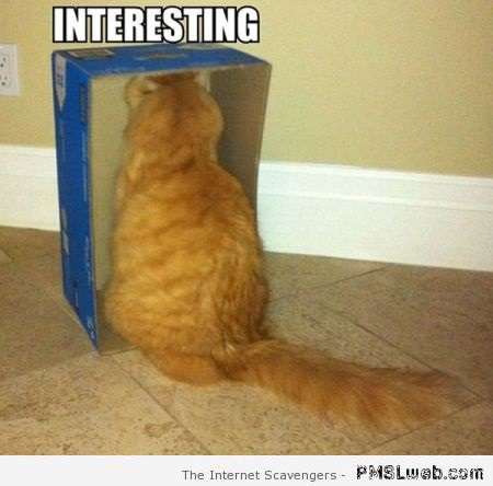 39-interesting-box-funny-cat-meme