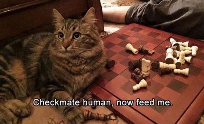 Checkmate_Human