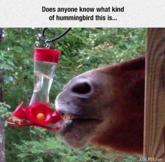 Anyone_Know_What_Kind