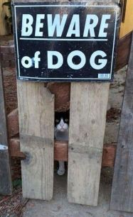 Beware_Of_Dog