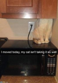 the_cat_is_not_taking_it_well