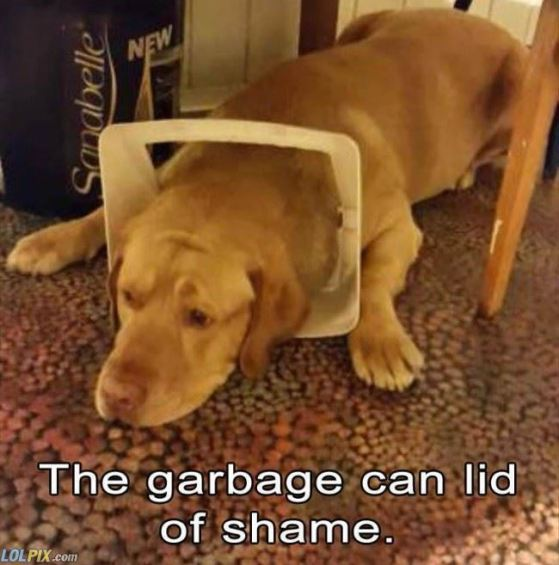 the_garbage_cat_lid_of_shame