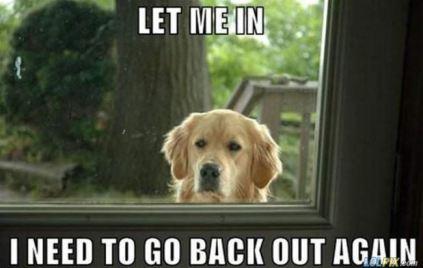 Let_Me_Back_In