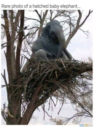 A_Hatched_Baby_Elephant